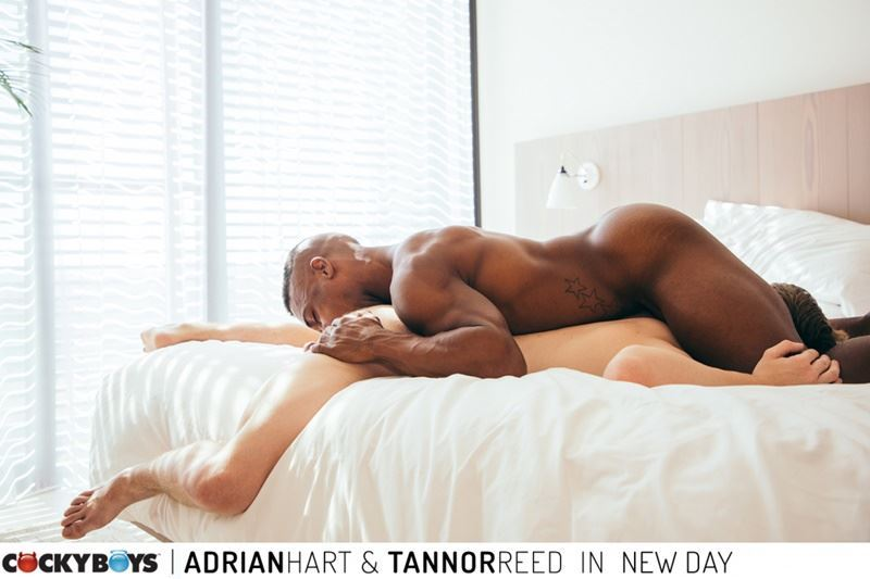 Cockyboys hot black stud Adrian Hart huge cock barebacking young boy Tannor Reed hot ass hole 024 gay porn pics - Cockyboys hot black stud Adrian Hart's huge cock barebacking young boy Tannor Reed's hot ass hole