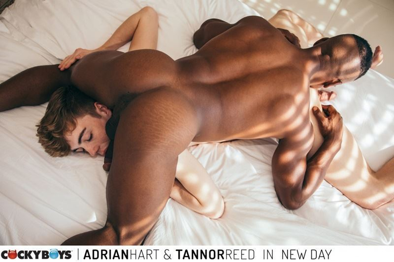 Cockyboys hot black stud Adrian Hart huge cock barebacking young boy Tannor Reed hot ass hole 025 gay porn pics - Cockyboys hot black stud Adrian Hart's huge cock barebacking young boy Tannor Reed's hot ass hole